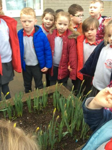 We saw the early stages of daffodils.