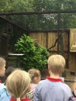 P4 Visit World of Owls